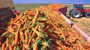 carrot-trailer